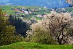 Родопа планина - пролет в село Гела.