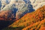 Есен в подножието на връх Копрен