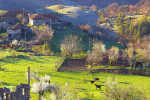 Пролетта се събужда в източни Родопи