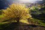 Първа пролет в Родопа планина