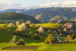 Първа пролет в село Горна Гела